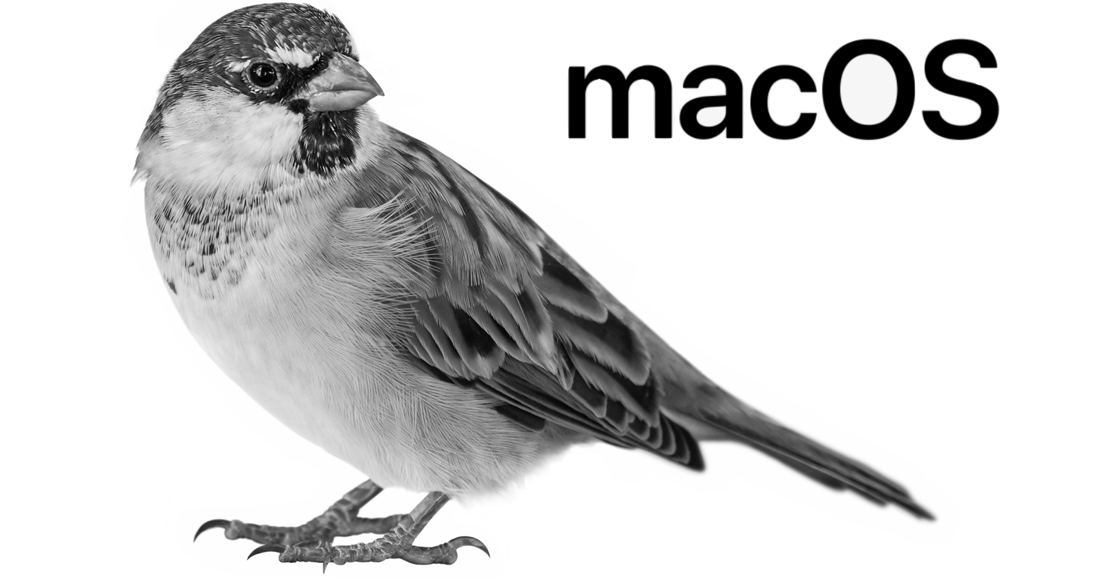 macmegasite.com - Silver Sparrow Malware Threat Affects M1, Intel Macs : Apple World Today